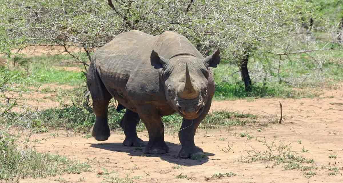 Особенности и запреты Свазиленда