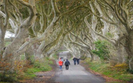 Особенности и запреты в Ирландии
