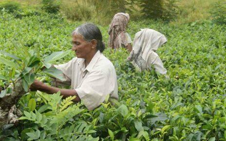 Культура Шри – Ланки