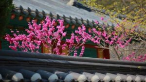 Культура Южной Кореи