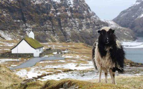 Особенности и запреты Фарерских островов